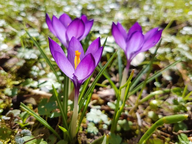 Yoga Fingerübung Frühling | Ayurveda Parkschlösschen Health Blog