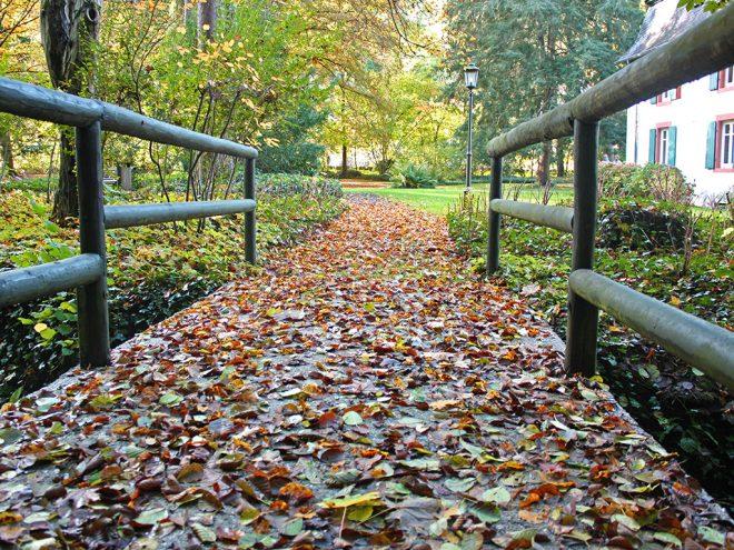 Dosha Story: Herbstspaziergang mit Vata, Pitta und Kapha | Ayurveda Parkschlösschen Health Blog