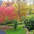 Die Doshas im Wechsel der Jahreszeiten: Vata im Herbst | Ayurveda Parkschlösschen Health Blog